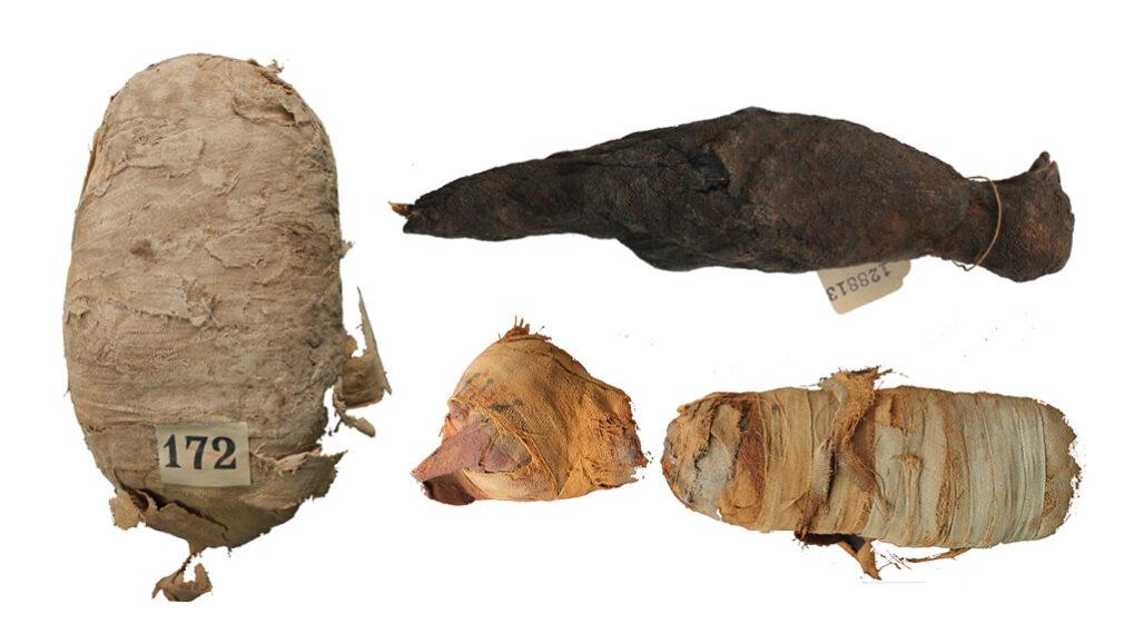 שלושת המומיות של החיות שנסרקו במחקר, קרדיט: SWANSEA UNIVERSITY