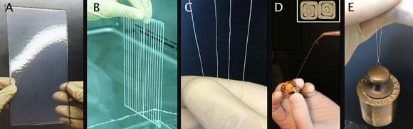 סליל של חוט שהחוקרים טוו מהמטריצה החוץ-תאית המיובשת | צילום: Nicolas L'Heureux