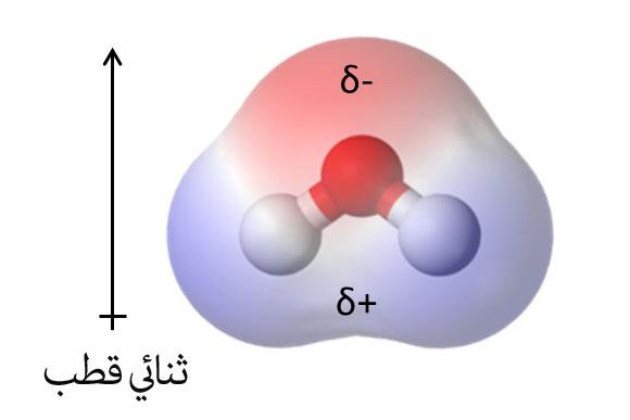 التّقطّب الموجود في جزيء الماء وثنائي القطب الّذي يمَثّله│التّخطيط مأخوذ من ويكيبيديا