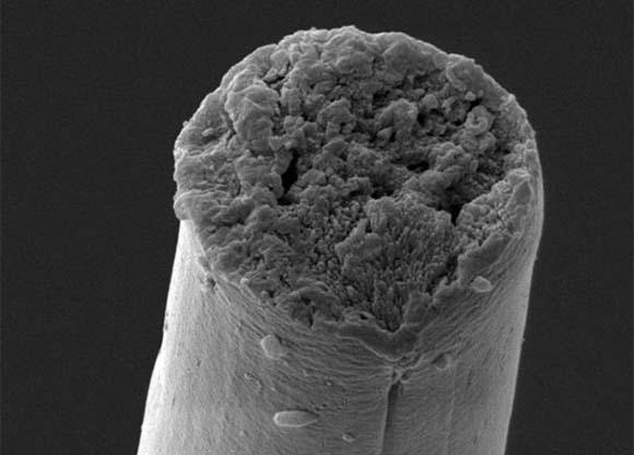 סיב משי שיוצר בשיטה ביו-סינתטית   Christopher Bowen