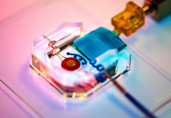העין המלאכותית, עם העפעף העשוי ג'ל (בכחול) | University of Pennsylvania