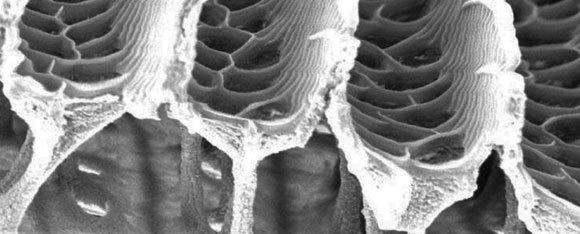 צילום מיקרוסקופ אלקטרונים סורק של כנף פרפר |  Alex Davis, Duke University