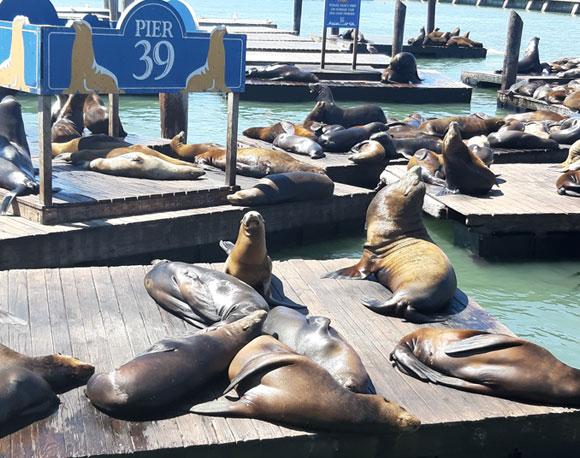 הסירות סולקו, אריות הים נשארו. רציף 39 בסן פרנסיסקו | צילום: יונת אשחר