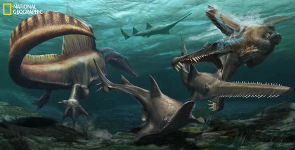 שני ספינוזאורוסים טורפים דגי חרב קדומים | Jason Treat, NG Staff, and Mesa Schumacher Art: Davide Bonadonna Source: Dr. Nizar Ibrahim, University of Detroit Mercy