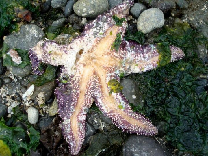 אחד מהמוני הקורבנות של מחלת כוכבי הים, Leigh Lilly
