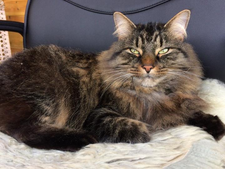 הדגמה של חתול מבצע מצמוץ ארוך,  Prof Karen McComb University of Sussex