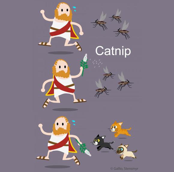 אילוסטרציה של אדם מגרש חרקים עם קטניפ, ובורח מחתולים | Gallio lab / Northwestern