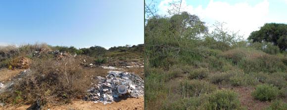 נים של הזנחה והרס: המפנה הצפוני של שמורת שיטה מלבינה ישרש, ב-2006 (מימין) וב-2019 (משמאל) | צילומים: איגור ארמיאץ'