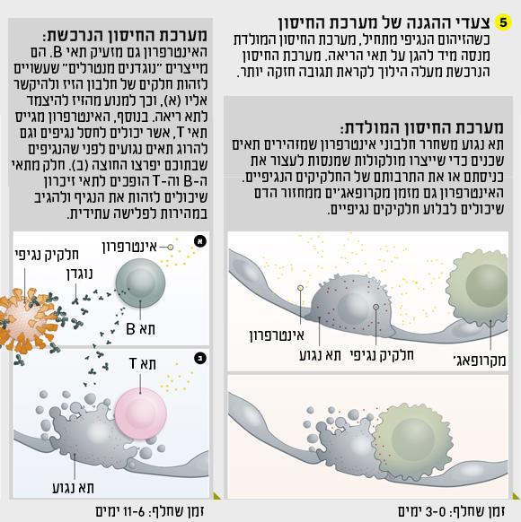 תרשים תגובת מערכת החיסון