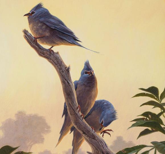 ההורים של רבות משושלות הציפורים המודרניות. מראה משוער של הציפור שחיה כמה מיליוני שנים לאחר ההכחדה הגדולה | איור: Sean Murtha