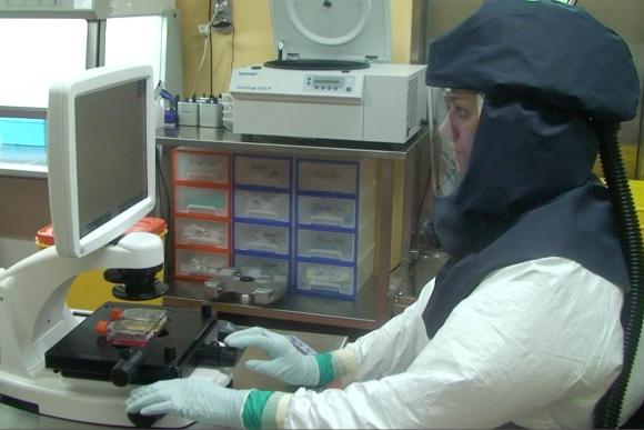 חקר נגיפי קורונה במכון לווירולוגיה ואימונולוגיה באוניברסיטת ברן | צילום: IVI, אוניברסיטת ברן