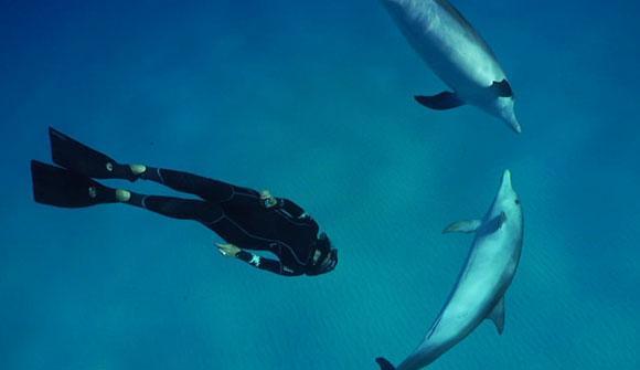 יישומים שונים של שיטות דומות לשהייה ארוכה מתחת למים. צולל עם שני דולפינים | מקור: ויקיפדיה, Dolphin Embassy