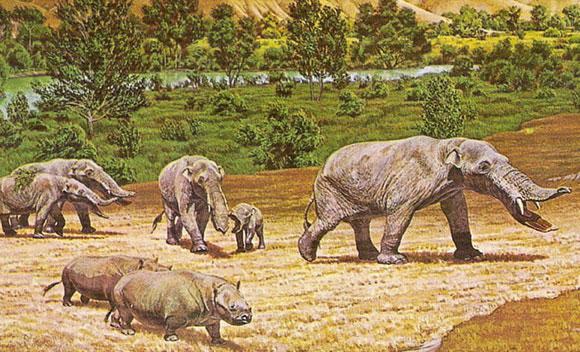 אמבלודון. שלב אבולוציוני בדרך לפיל