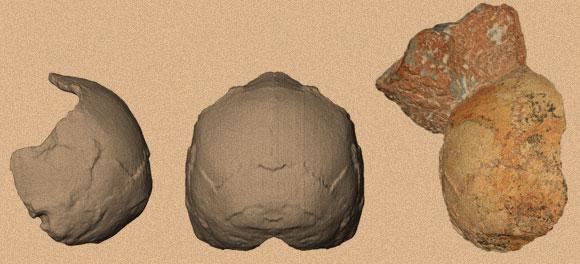 גולגולת אפידימה 1 (משמאל) והשיחזור שלה. קרדיט: קתרינה הרוואטי