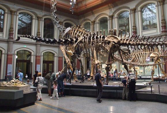 היכל הדינוזאורים במוזיאון הטבע של ברלין | צילום: Ilja.nieuwland , ויקיפדיה