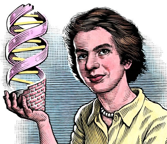 רוזלינד פרנקלין עם מודל ה-DNA | ציור: Bill Sanderson, SPL