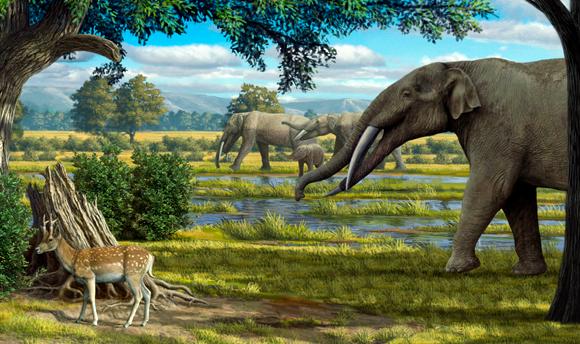 גומפותריום, אחד הפילאים הקדומים של אזורנו   איור: MAURICIO ANTON / SCIENCE PHOTO LIBRARY