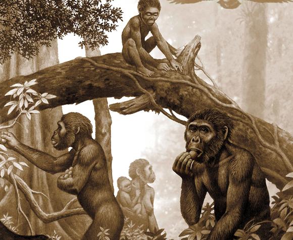 שבט אוסטרלופיתקוסים