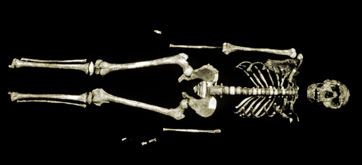 """העצמות של """"ילד טורקנה""""   מקור: SCIENCE VU,NMK, VISUALS UNLIMITED / SCIENCE PHOTO LIBRARY"""