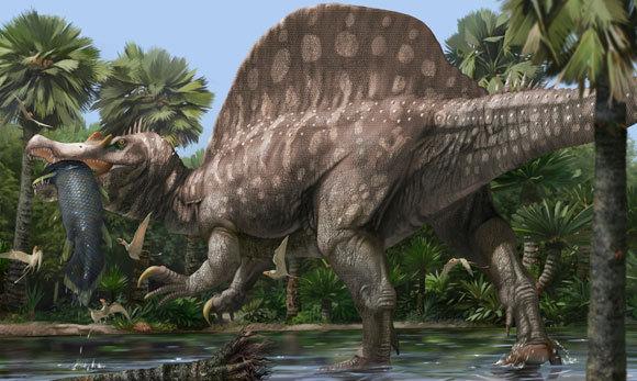 ספינוזאורוס בפעולה | איור: JAIME CHIRINOS / SCIENCE PHOTO LIBRARY