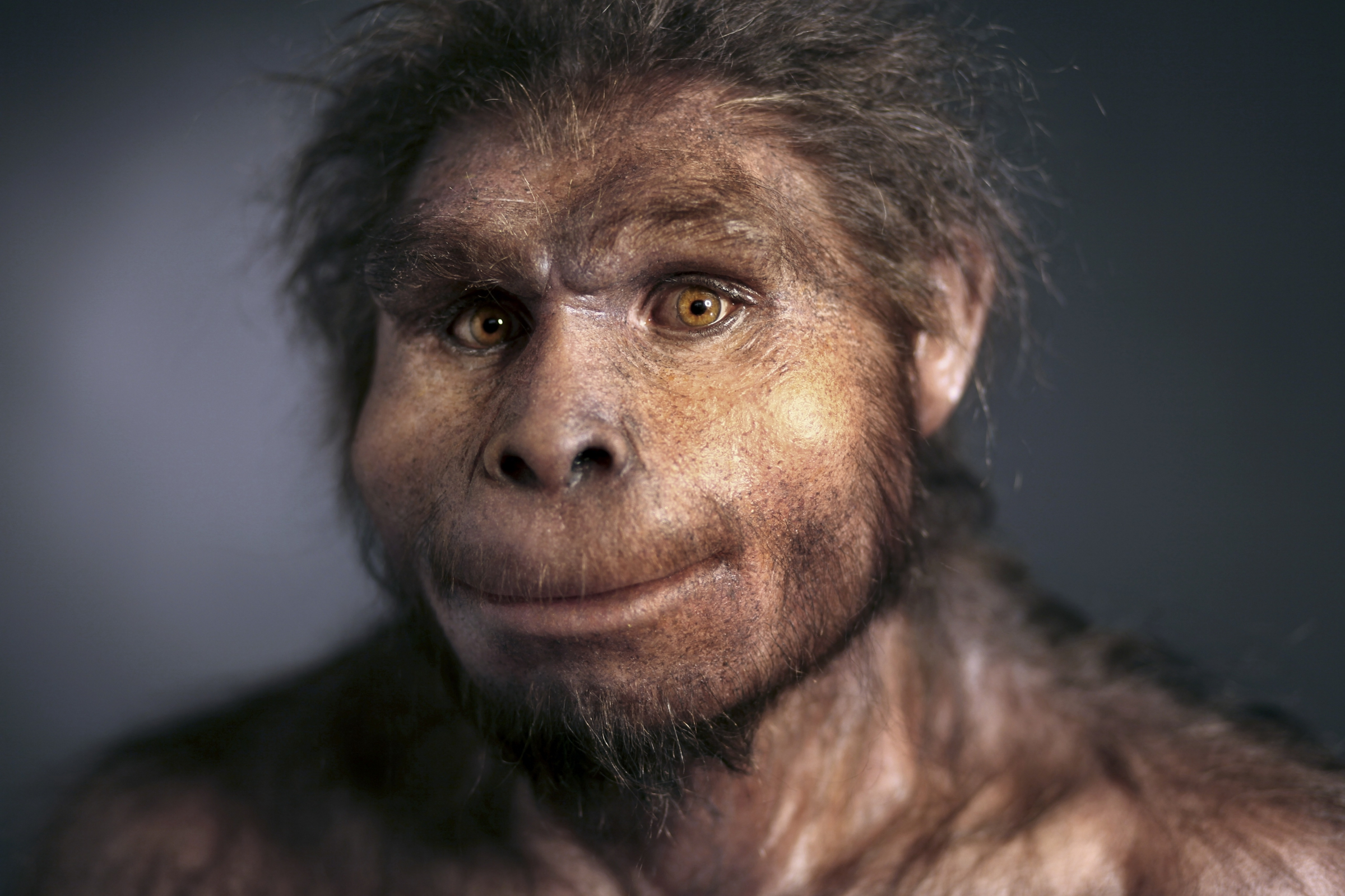 """שחזור של מבנה הפנים של הומו ארקטוס, משמאל - מאובן """"ילד טורקנה"""" - השלד השלם ביותר שקיים בידנו של המין הזה."""