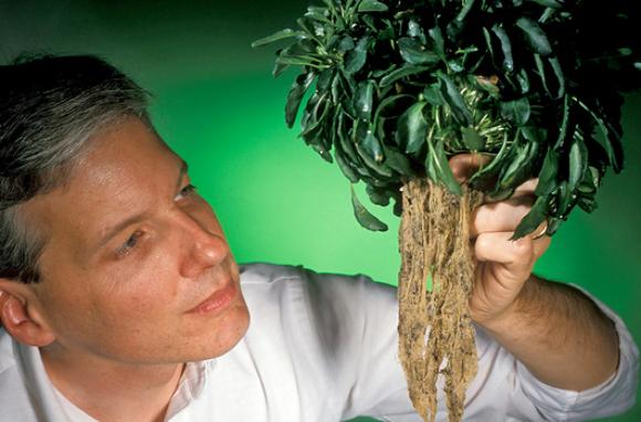 חוקר בוחן שורשי צמח מהסוג Thlaspi, צובר-על של מתכות כבדות בהן אבץ וקדמיום   צילום: KEITH WELLER / US DEPARTMENT OF AGRICULTURE / SCIENCE PHOTO LIBRARY