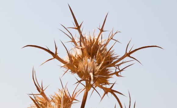 רוצים יבשים של דרדר | צילום: ASHLEY COOPER / SCIENCE PHOTO LIBRARY