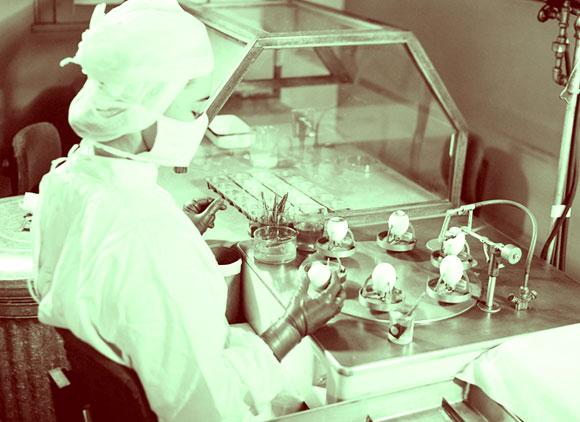 מחקר וייצור חיסונים בעזרת ביצים | SPL, NIH