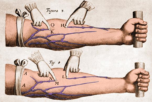 איור צבוע מתוך מחקרו של הארווי | מקור: Photo Researchers / Science Photo Library