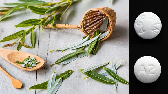 Blätter der Silber-Weide und Aspirinpillen | Quelle: Voisin, Phanie, Giphotostock, SPL