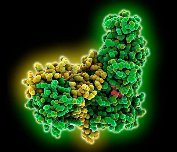 אנזימי סירטואין (ירוק וצהוב) | איור: Laguna Design / Science Photo Library