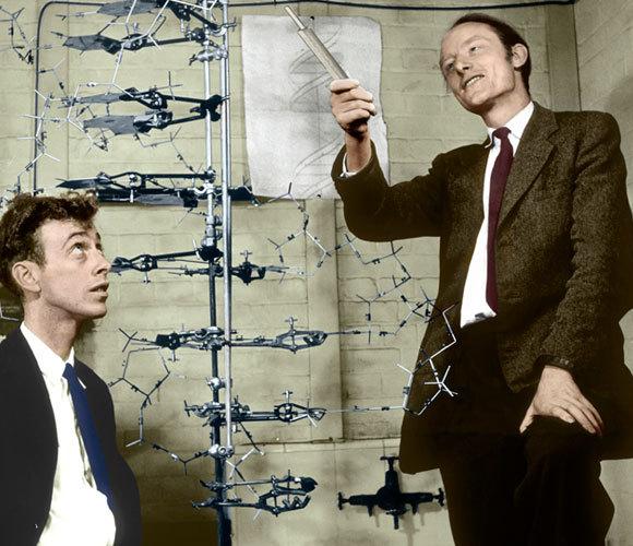 ווטסון וקריק לצד המודל שלהם, ב-1953 | A. Barrington brown, © Gonville & Caius College