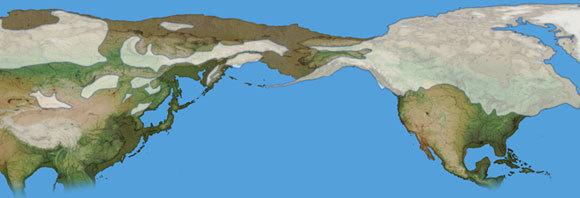 שטח אדמה נרחב למדי שחיבר בין היבשות, והיה מכוסה ערבות עשב. מפה של ברינגיה, צפון אמריקה מימין ואסיה משמאל | Mikkel Juul Jensen, SPL