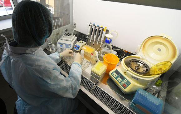דרושה היכרות טובה עם הביולוגיה של הנגיף. מחקר על נגיף הקורונה החדש | צילום: SPUTNIK / SCIENCE PHOTO LIBRARY