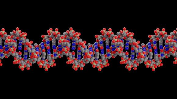 מולקולת DNA | איור: RESEARCH VISUALIZED / SCIENCE PHOTO LIBRARY