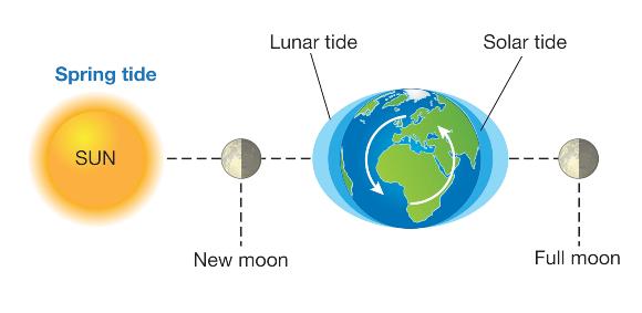 שילוב כוחות של הירח ושל השמש סייע לפעילות האדם לחילוץ האנייה | איור: SCIENCE PHOTO LIBRARY