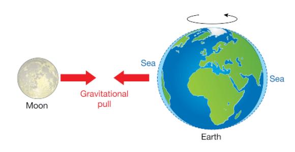 הגאות מתרחשת באזור הקרוב ביותר אל הירח ובאזור המרוחק ממנו | איור: SCIENCE PHOTO LIBRARY