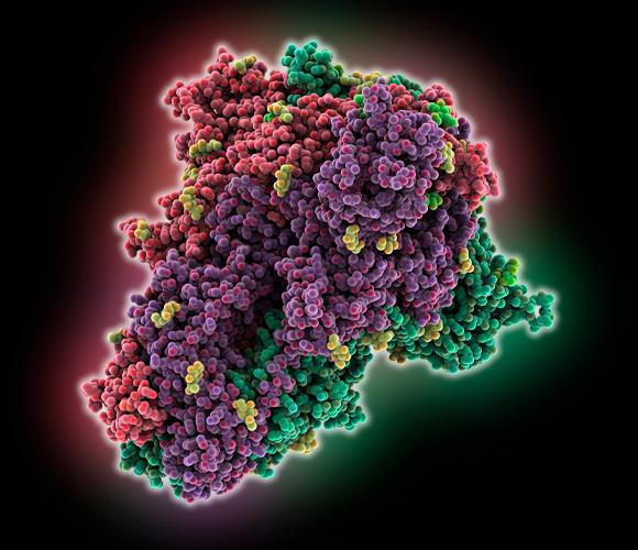 חלבון הספייק של נגיף קורונה של עטלפים | איור: LAGUNA DESIGN / SCIENCE PHOTO LIBRARY