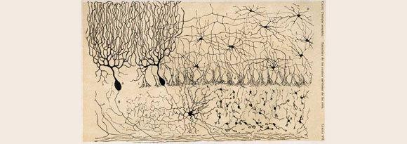 שפע עצום של מידע חדש. ציור של רמון אי קחל של תאי עצב במוח הקטן של אפרוח צעיר במאמר מ-1905 | מקור: ויקיפדיה, נחלת הכלל