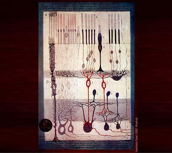 תמונות אמנותיות. מבנה רשתית העין של יונק בציור של רמון אי קחל משנת 1900 | מקור: ויקיפדיה, נחלת הכלל