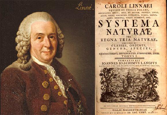 """קרולוס לינאוס לצד הדף הראשון בספרו """"מערכת הטבע""""   ויקיפדיה, Kryp, AndreCostaWMSE-bot"""