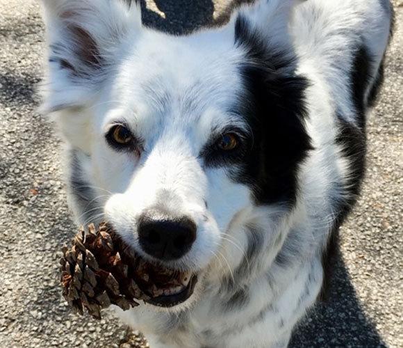 זכרה את שמותיהם של יותר מ-1,000 צעצועים, נוסף על האיצטרובל. הכלבה צ'ייסר | מקור: ויקיפדיה, פילי ביאנקי
