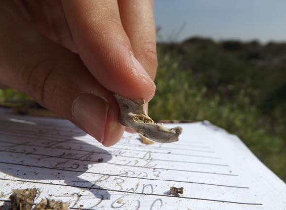 שרידי בעל חיים שמצאו מתנדבים בשטח ורשימת המינים שזוהו | צילום: איגור ארמיאץ'-שטיינפרס