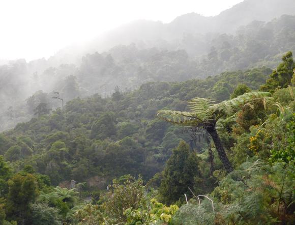 יער גשם בניו זילנד   צילום: איגור ארמיאץ' שטיינפרס