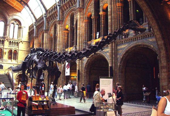 שלד הדיפלודוקוס במוזיאון בלונדון | צילום: Ballista, ויקיפדיה
