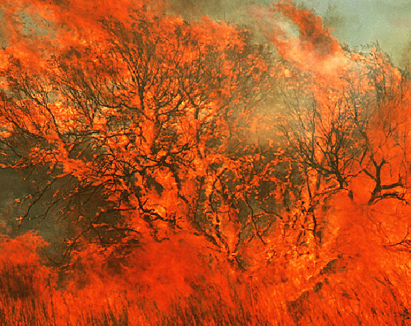 שריפת יער באוסטרליה המערבית   צילום: Jerry Mason / Science Photo Library