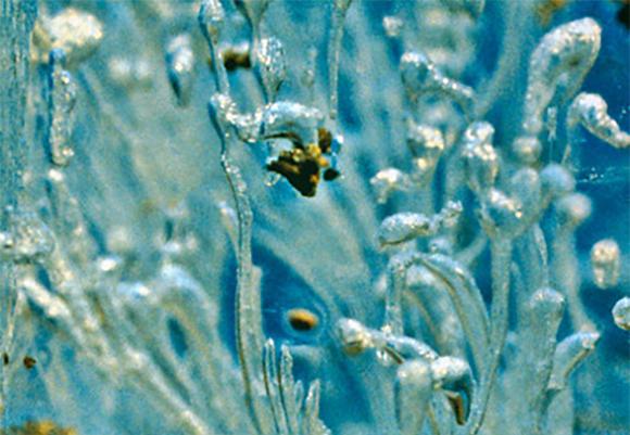 דגימת קרח | צילום: Ed Adams / Montana State University / Science Photo Library