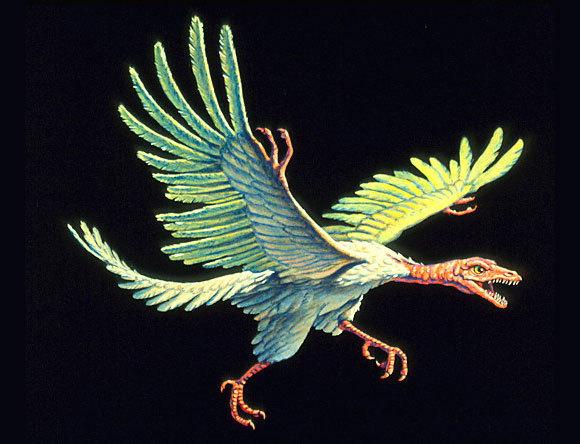 אילוסטרציה של ארכיאופטריקס, ציפור מוקדמת שעדיין היו לה שיניים, וגם אצבעות | Joe Tucciarone, Science Photo Library