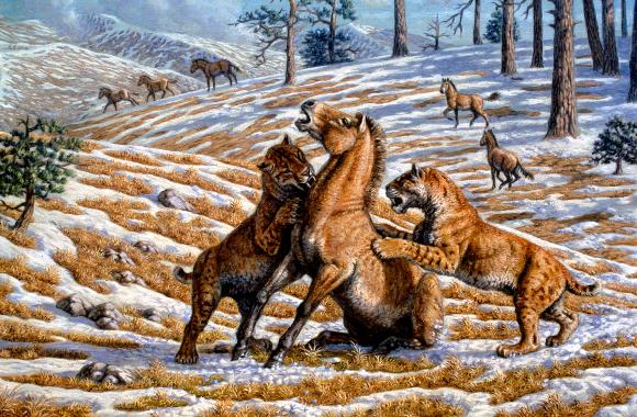 מסקנות על בעלי החיים מעצם רגל אחת. חתולי שן סימיטר טורפים סוס בר | איור: MAURICIO ANTON / SCIENCE PHOTO LIBRARY