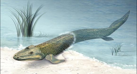 היצור הימי הקרוב ביותר לבעלי ארבע רגליים. טיקטליק | איור: NATIONAL SCIENCE FOUNDATION / SCIENCE PHOTO LIBRARY